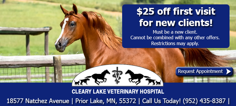 clearylakenewclientspecial_equine