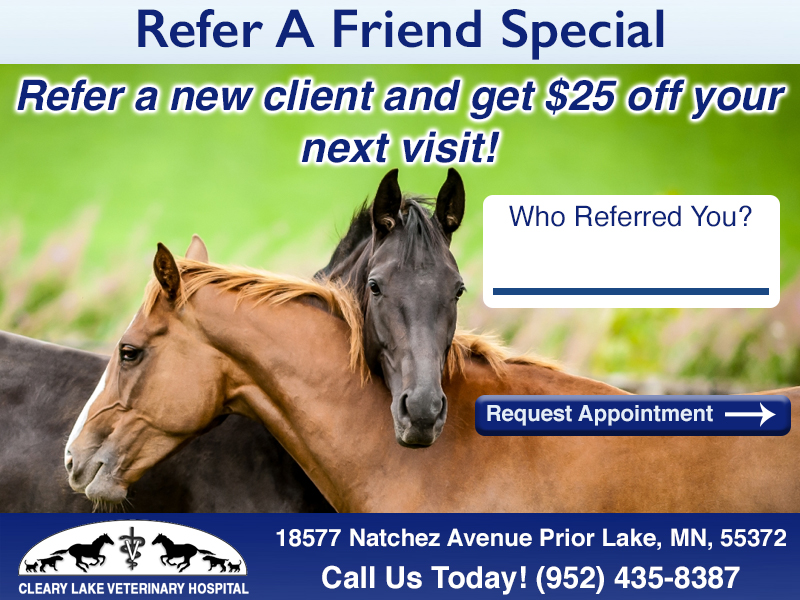 clearylakereferralspecial_equine